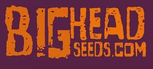 Bighead Seeds