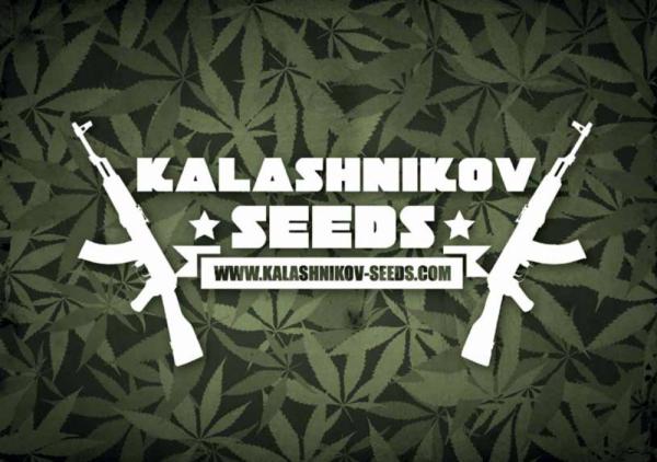 Kalashnikov Seeds