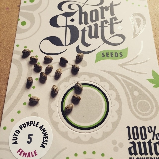 Short Stuff Seeds
