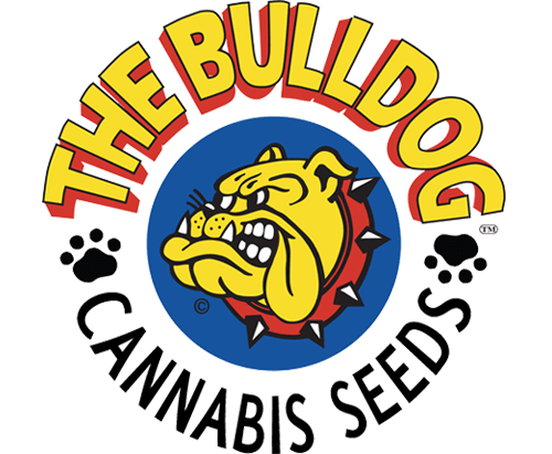 Bulldog Seeds