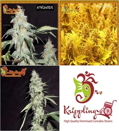 Auto Mix A by Dr Krippling Seeds