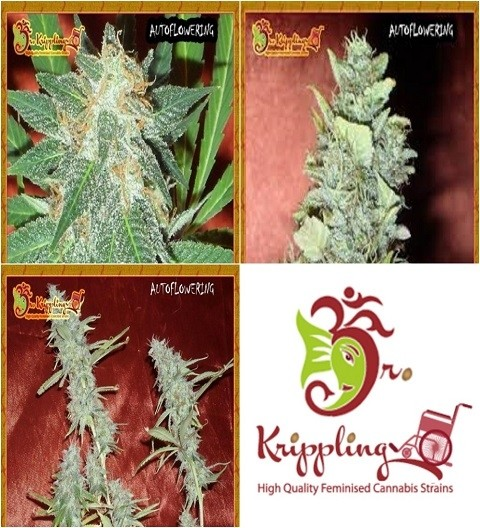 Auto Mix B by Dr Krippling Seeds