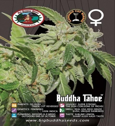 Tahoe Feminized by Big Buddha Seeds