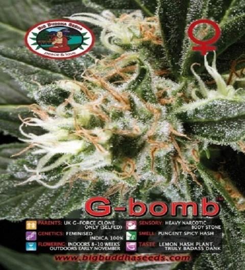 G Bomb Feminized by Big Buddha Seeds