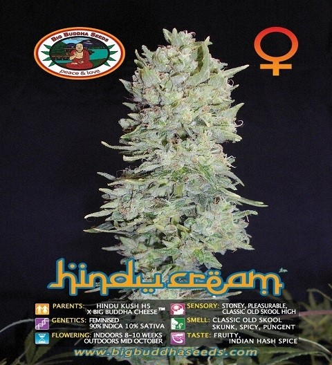 Hindu Cream by Big Buddha Seeds