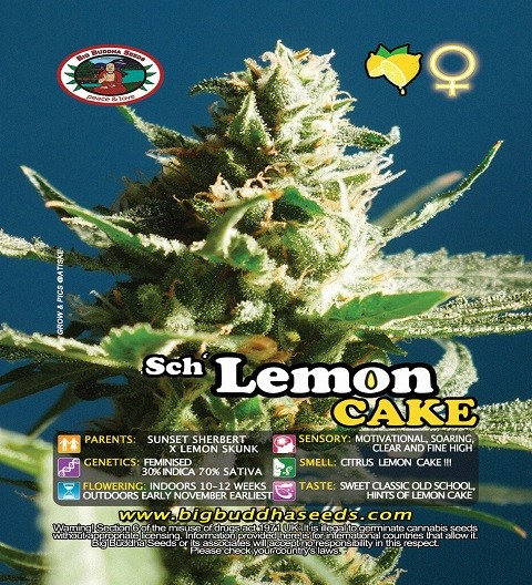 Sch' Lemon Cake by Big Buddha Seeds