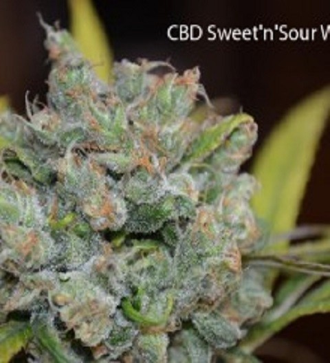 CBD Crew Sweet and Sour Widow