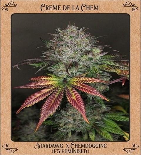 Creme De La Chem by Mephisto Genetics