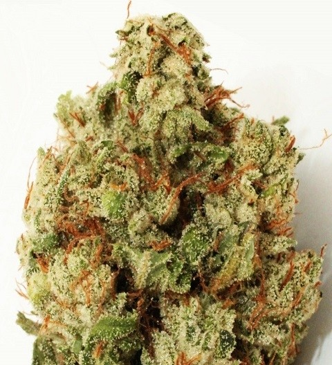 Green Ninja Feminized by Heavyweight Seeds