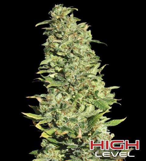 High Level by Eva Seeds