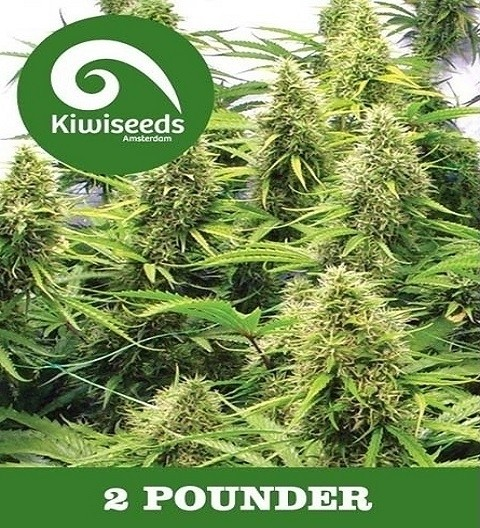 2 Pounder Regular – Kiwi Seeds
