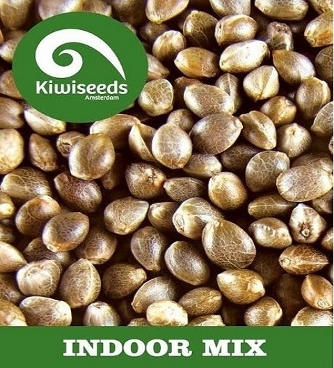 Indoor Mix by Kiwi Seeds
