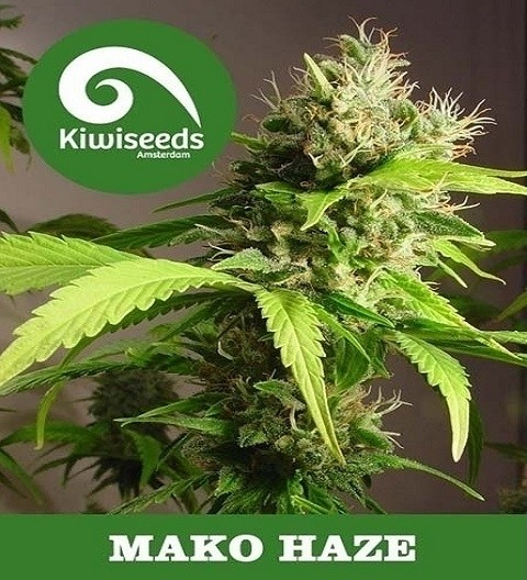 Mako Haze by Kiwi Seeds