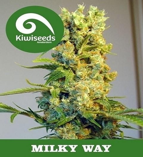 Milky Way by Kiwi Seeds