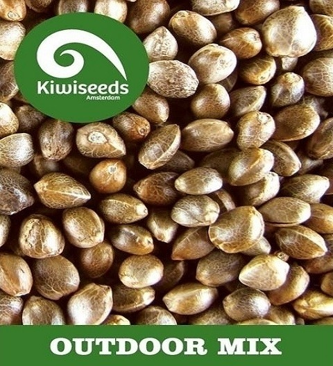 Outdoor Mix by Kiwi Seeds