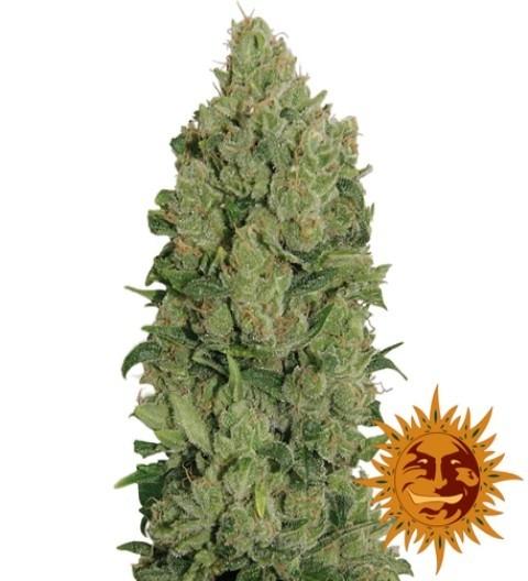 NYC Diesel Auto Feminized Marijuana Seeds