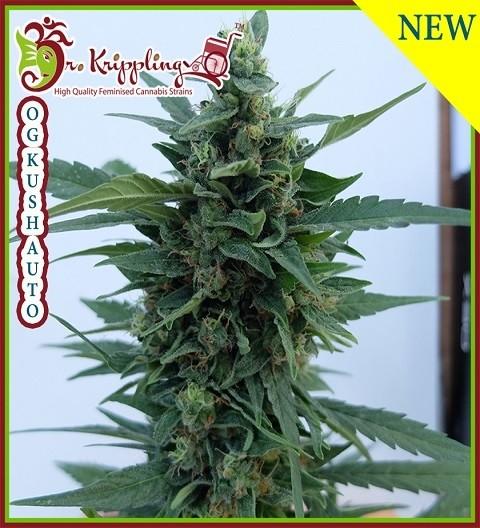 OG Kush Auto by Dr Krippling Seeds