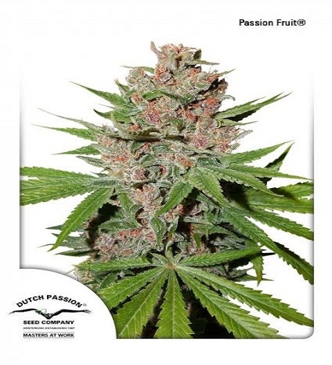 Passion Fruit by DP Seeds