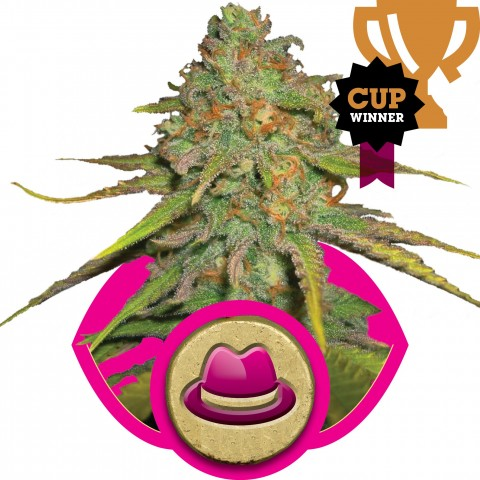 O.G Kush by Royal Queen Seeds