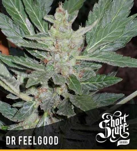 Dr Feelgood Auto Fem - Short Stuff