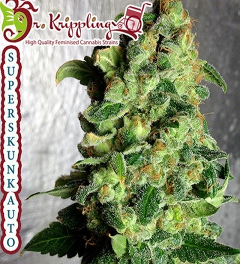 Super Skunk Auto by Dr Krippling Seeds