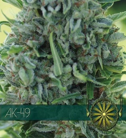 AK 49 Feminized by Vision Seeds