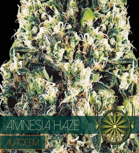 Amnesia Haze Auto by Vision Seeds
