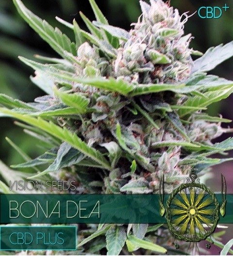 Bona Dea CBD+ Feminized by Vision Seeds