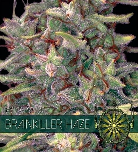 Brainkiller Haze by Vision Seeds