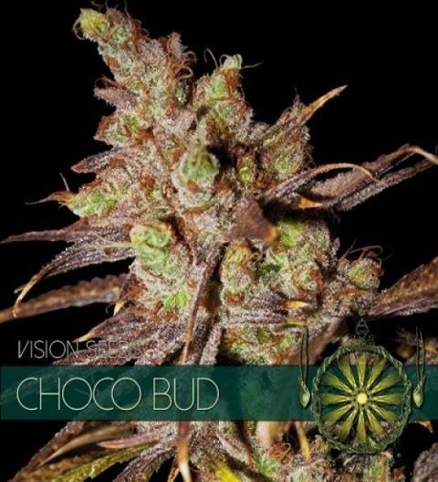Choco Bud Feminized by Vision Seeds