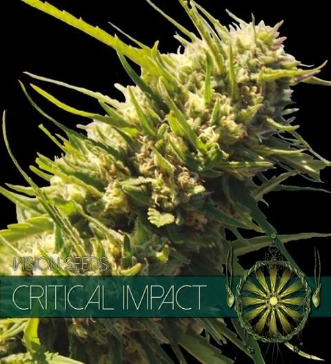 Critical Impact Feminizedby Vision Seeds