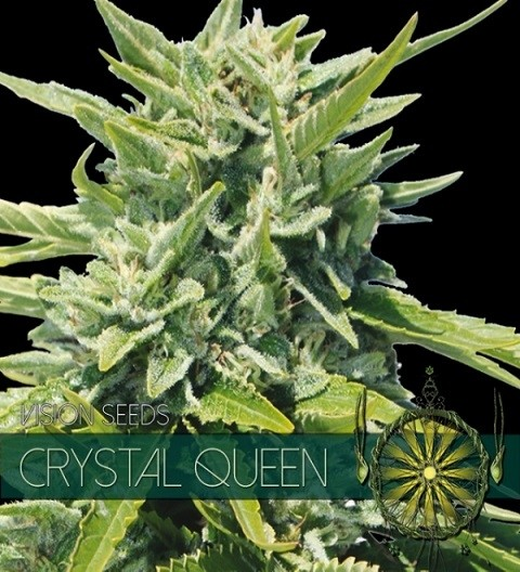 Crystal Queen Feminized by Vision Seeds