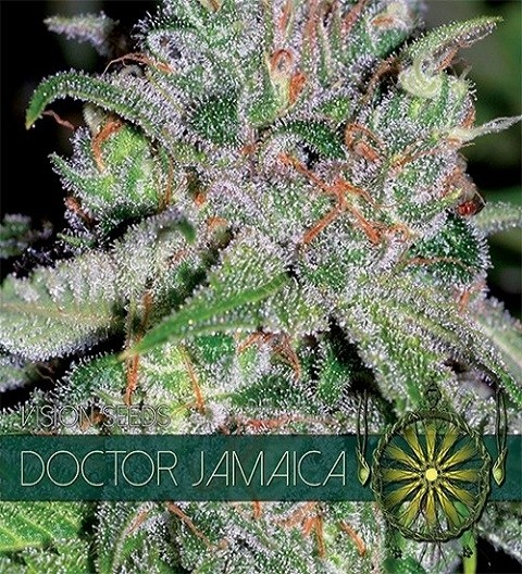 Doctor Jamaica Feminized by Vision Seeds