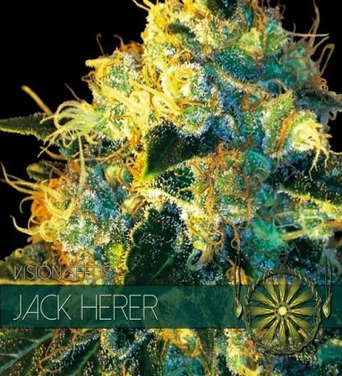 Jack Herer by Vision Seeds