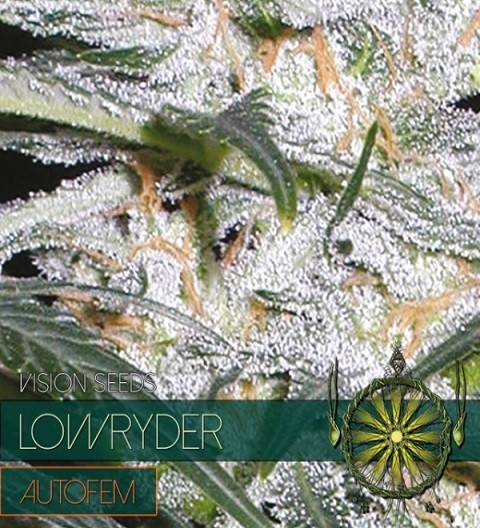Lowryder Auto by Vision Seeds