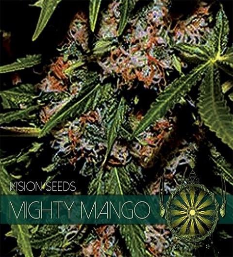 Mighty Mango Bud Feminized by Vision Seeds