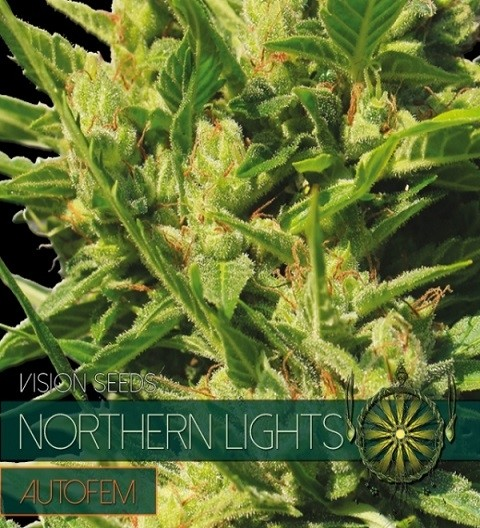Northern Lights Auto by Vision Seeds