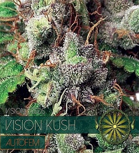 Vision Kush Auto by Vision Seeds