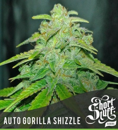 Auto Gorilla Shizzle by Short Stuff
