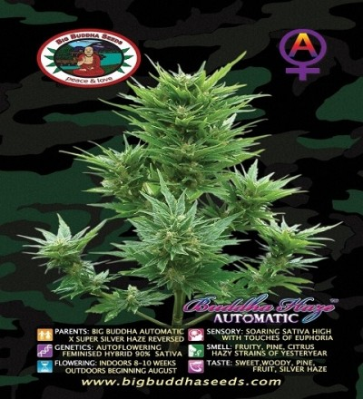 Buddha Haze Automatic by Big Buddha Seeds