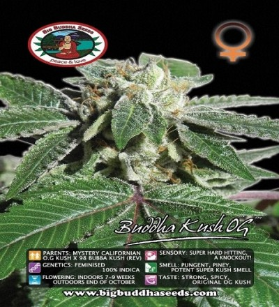 Buddha Kush O.G. Feminized by Big Buddha Seeds