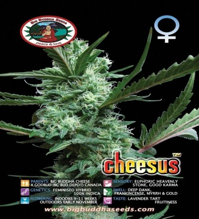 Cheesus by Big Buddha Seeds