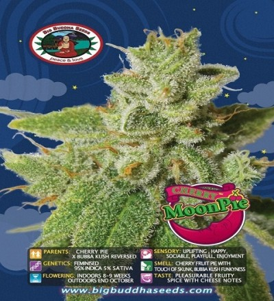 Cherry Moon Pie by Big Buddha Seeds