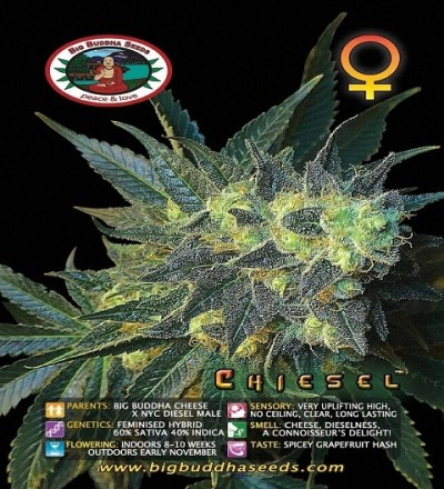 Chiesel by Big Buddha Seeds