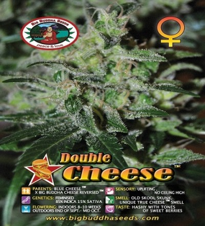 Double Cheese Feminized by Big Buddha Seeds
