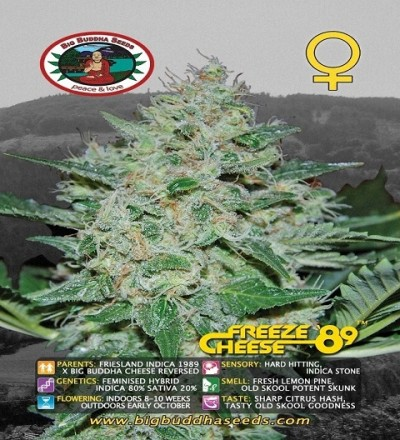 Freeze Cheese '89 Feminized by Big Buddha Seeds