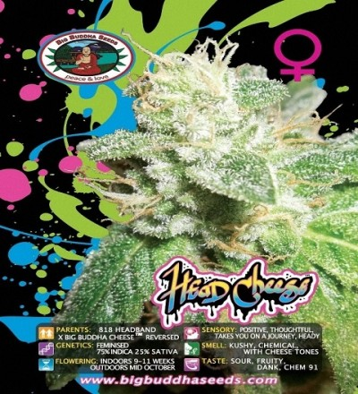 Head Cheese Feminized by Big Buddha Seeds