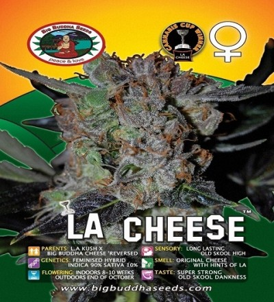 LA Cheese Feminized by Big Buddha Seeds