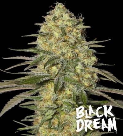 Black Dream by Eva Seeds