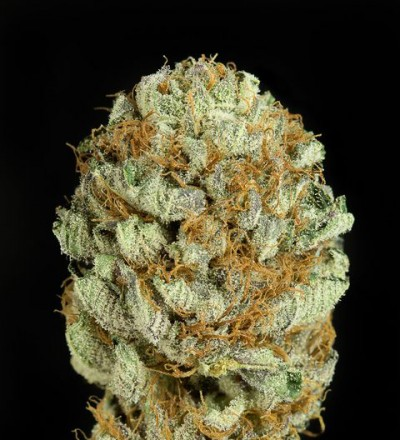 Blue Kush Feminized - Dinafem Seeds